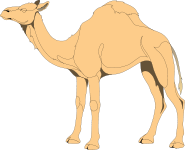 A one-humped camel